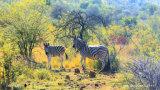 Im Freien kundschaftende Kamera IR-Digital für Jagd-Tiere