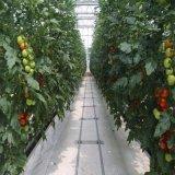 Serres chaudes hydroponiques de légumes de qualité