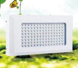 La più nuova promozione 600W LED coltiva l'alto potere chiaro LED della PANNOCCHIA coltiva gli indicatori luminosi