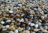 Цветастый естественный камень Cobble & камушка реки для ландшафта/вымощать сада