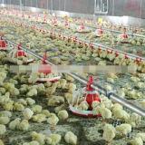 Volles Set-automatisches Geflügel steuern Halle-Gerät für Bratrost