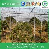 Овощи/сад/цветки/дом полиэтиленовой пленки фермы зеленая
