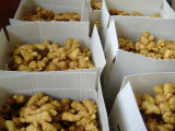 Supplier dorato New Crop Fresh Ginger (200g ed aumentano)