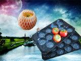 Bandejas de los PP para las bandejas de empaquetado de empaquetado de la fruta de la fruta fresca