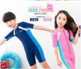 최신 판매 한 조각 짧은 소매 수영복 &Color 잠수복