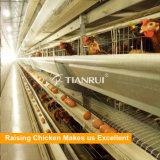 Tianruiの最もよいデザイン耐久の自動Hフレーム電池の層の鶏のケージ