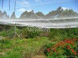 сад предохранения от 45GSM 3*7mm с анти- сетью окликом