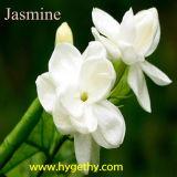 Extrait de jasmin, le meilleur prix de l'extrait de jasmin (HY213)