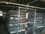 Alto certificato galvanizzato ISO9001 della gabbia del pollo di Matomatic