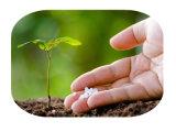 zeewier meststof met Plant de groeiregelgever voor wortel (vloeistof)