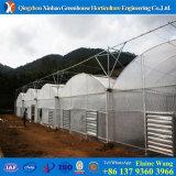 Invernadero plástico de la cubierta de la fábrica competitiva de China del coste para el tomate