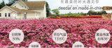 Tè organico della Rosa