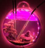 Cuvette acrylique ronde de poissons avec la DEL
