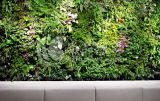 녹색 벽 구 Wall14425931409800의 고품질 인공적인 플랜트 그리고 꽃