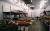 PU Sandwich Panelが付いている花のStorage冷蔵室