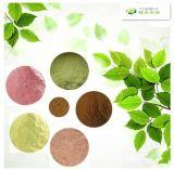 Выдержка 6%-20% Sennosides листьев сенны