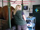 Couleur de scanner d'ultrason d'ordinateur portatif Doppler Ew-C8V avec la sonde rectale LV7.5/60 pour la grossesse de test de grands animaux