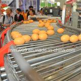 Sistema de recolección de huevos para granjas avícolas