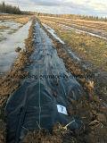 رخيصة [بّ] زراعة يحاك تغذية بناء لأنّ أرض تغذية