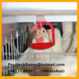 Type galvanisé à chaud automatique cage de 4 rangées H de couche de poulet