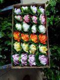 Plantas y flores artificiales de Lotus 10cm Gu-HS-Lotus0017