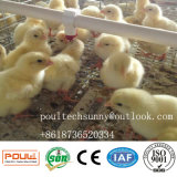 Automatischer Hünchen-Huhn-Rahmen eines Rahmens mit Bescheinigung von ISO9001