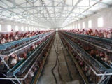Anti-Corrosion гальванизированная стальная цыплятина расквартировывает/дом цыпленка