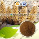 Uittreksel van het Kruid van 100% het Natuurlijke Desertliving Cistanche
