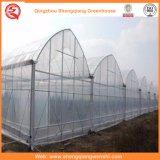 Casa verde da película do PE da batata/tomate com sistema de ventilação