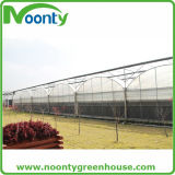 단 하나 층 온도 조종 냉상 녹색 집