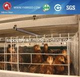 Jaula galvanizada caliente de la capa del pollo del equipo de las aves de corral del estándar internacional