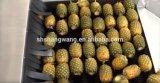 혼합 신선한 과일 Uice 충전물 기계 야채 가공 기계