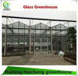 Chambre verte en verre de ventes de Multi-Envergure chaude de Venlo