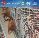 La Chine 24 constructeurs d'années de cage de poulet