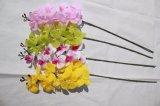Hoher Quaity realer Noten-Latex-künstliche Motten-Orchidee-Fälschungs-Blumen für Haupthochzeits-Dekoration