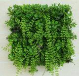 Piante decorative della parete verde artificiale che ricoprono le parti