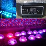 iluminación mágica de la etapa de la bola del disco de 6X3w DMX DJ