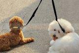 [50كم] لون نيلون لا مشتبك مزدوجة كلب رباط لأنّ كلب رصاص 2 طريق اثنان [بت دوغ] يمشي أمان