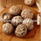 Fungo di Shiitake secco prezzo inferiore con il certificato di Halal