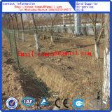 PVCヨーロッパの塀かより安い塀またはフィールド塀