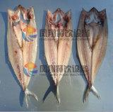 Het Fileren van de Buik (van fgb-170) Vissen van de Zalm Verdelende Machine die Twee Stukken snijden