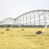 Impianto di irrigazione concentrare elettrico del perno/irrigazione a pioggia agricola lineare movimento laterale