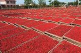 Pó orgânico do suco de Goji, moinho de Chinense do Lycium