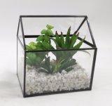 Piante conservate in vaso del Terrarium di alta classe artificiale succulenti