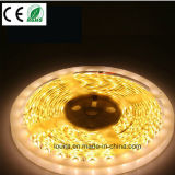 5050 SMD LED de tira 60LED / M impermeable IP65