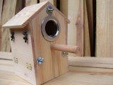 Camere esterne su ordine dell'uccello di legno solido