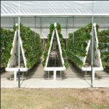 Invernadero comercial del hidrocultivo del precio favorable para el invernadero agrícola