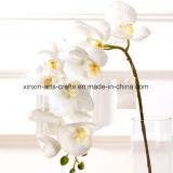 10 fiori artificiali di tocco delle teste della piccola orchidea di seta reale di Phalaenopsis