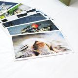 Impression de carte postale de littérature et d'horizontal d'art (avec l'enveloppe)