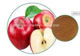 Polyphénols normaux élevés de vente chauds 50%, 70%, 75%, antioxydant d'extrait de 80% Apple